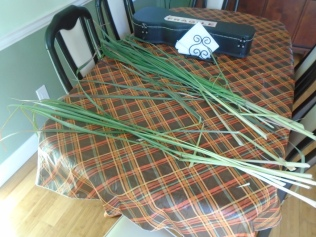 Seperating the lemongrass shoots